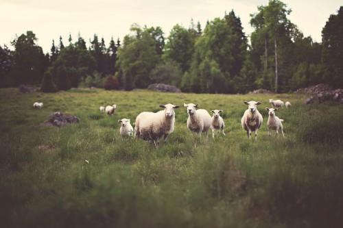 2-Lamb.jpg