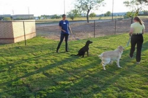 Dog-Clinic-in-Abilene.jpg