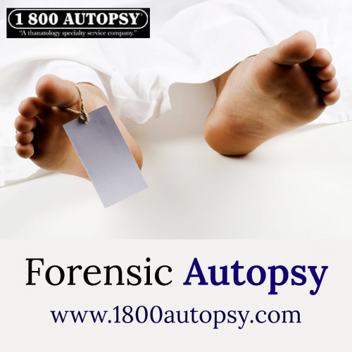 Forensic-Autopsy.png