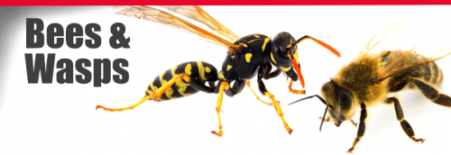 Small Animal Control in Jersey City, Nj  Welcome to Get'm Pest Control, Get the best pest control & small animal control services in NJ, New Jersey City. We provide the best pest control services & small animal control services in Jersey City, NJ with a 100% satisfaction guarantee.  https://getmpestcontrol.com/