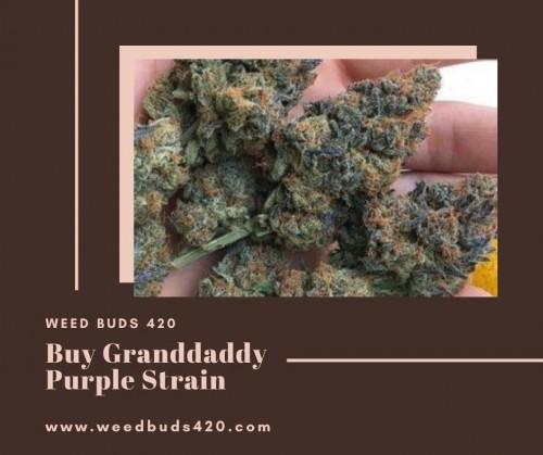 Buy-Granddaddy-Purple-Strain---WEEDBUDS420.jpg