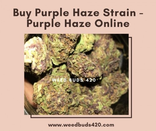 Buy-Purple-Haze-Strain-_-Purple-Haze-Online-_-Weed-Buds-420-Store.jpg