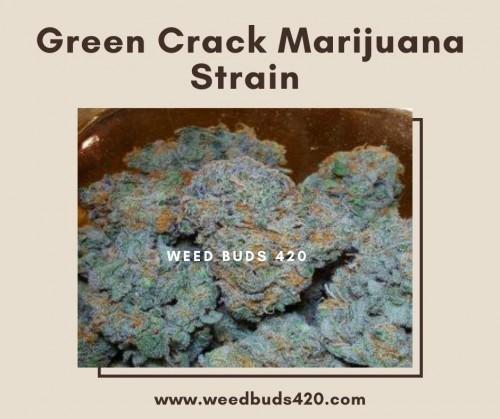 Green-Crack-Marijuana-Strain---WEEDBUDS420.jpg
