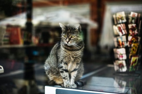 The-Importance-of-a-Reliable-Pet-Store-in-Your-Life.jpg