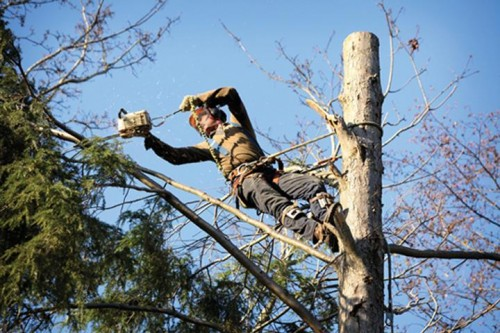 a-cut-above-tree-service.jpg
