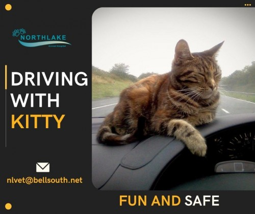 Travel-Safely-with-your-Pet.jpg