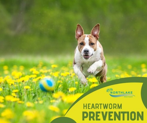 Best-Treatment-for-Dog-Heartworms.jpg