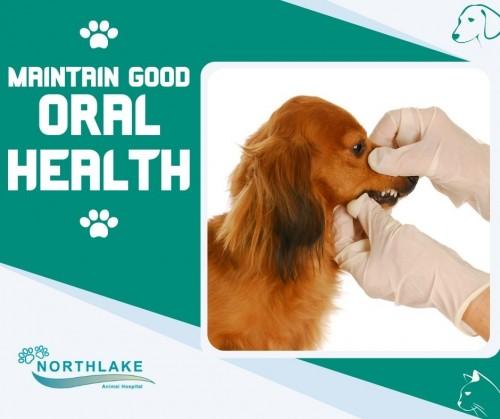 Top-Notch-Pet-Dental-Services.jpg