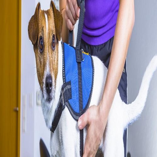 Home-Euthanasia-For-Dogs-Littleton-CO.jpg