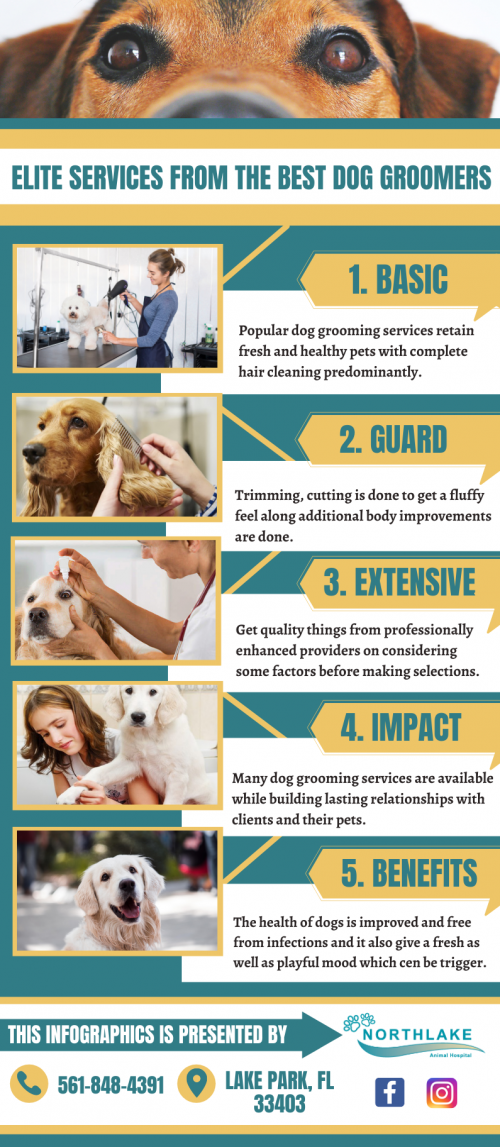 Dedicated-Experts-For-Dog-Grooming.png