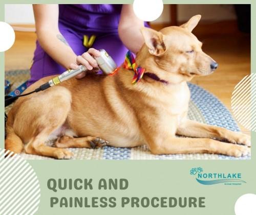 Pain-Management-Option-for-Pets.jpg