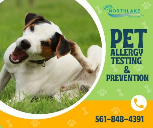 Did your pet get any allergic senses? Just visit our clinic we provide gentle treatment to the pets and our veterinarians are well versed in handling the pets and give a joy-full life. Please call us.