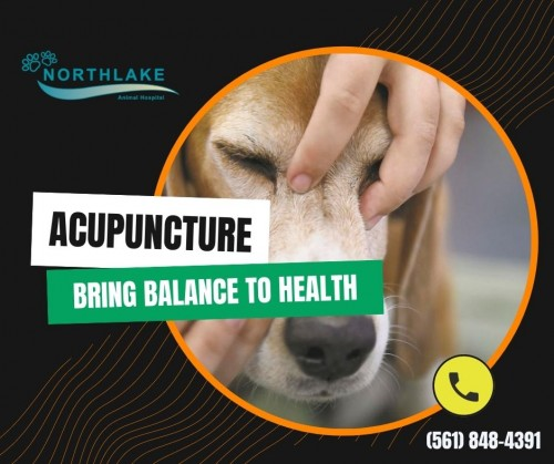 Creating-The-Best-Treatment-Plan-for-your-Pet.jpg