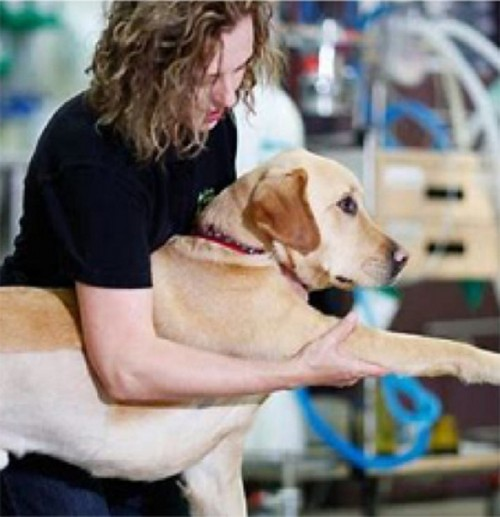 Physical-Therapy-For-Dogs-Andor-Cats-Littleton-CO.jpg