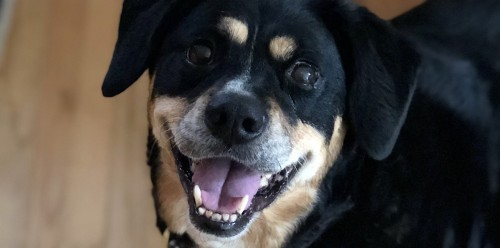 Canine-Rehabilitation-Denver-Metro-Area.jpg