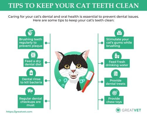 Tips-to-keep-your-cat-teeth-clean.jpg