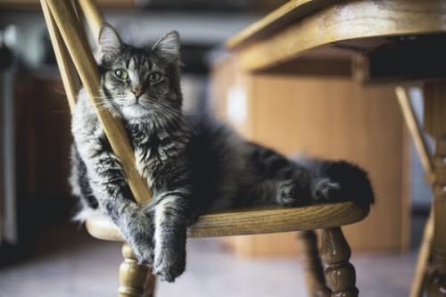 A-Cat-Scratching-Post-for-Endless-Fun.jpg
